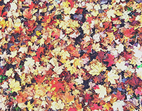 Fallen Leaves, Cold Springs