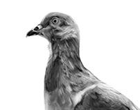 Ilustración: Paloma del eje ambiental
