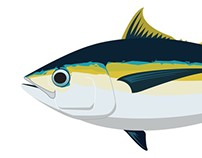 All the Tunas - Vector Illustrations -