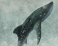 Tauró balena