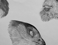 Freezer-Bird Studies
