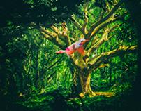 Forest, Bird 1000 x 1000 px