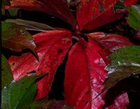 Autumnal pattern...