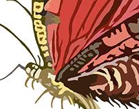 Random Flutterbug