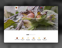 Arslantürk Hazelnut / Business Website