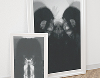 Black Fawn Posters