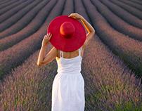 Lavender fields bloom
