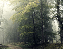 Early morning in a forest