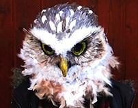 Owl's full head mask in papier-mâché