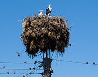Rural Living White Storks