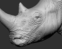 Rhino WIP