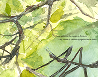 About Stick Insects