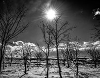 Sun in a cold day