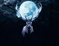 Mysterious Deer in Night