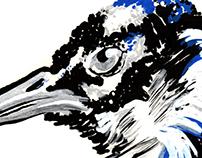 O Olhar do Pavão