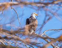 Des Moines River Wildlife III
