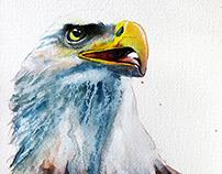 Portrait of the Bald Eagle