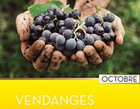 Calendar of wine
