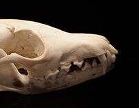 Skull Study 2015