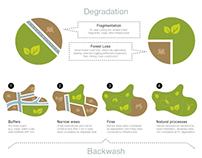 "Infographics ""Infact Forest Landscape"""