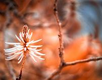 Flower Infrared