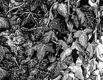 IVY Original Pen and Ink Drawing