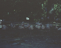 Disposable moments