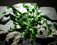 plastic aquarium plants | wondering vine