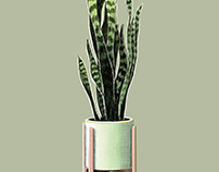 Illustration | Sansevieria plant