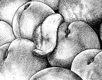 ASC 658 - 20160727 More juicy fruits