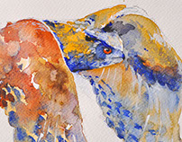 Owls,eagles and others birds