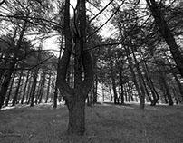 Arboretum Old Wood