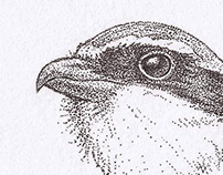 Stippling - Bird