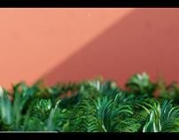 Vegetation RnD