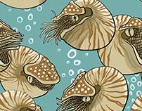 Nautilus Collection