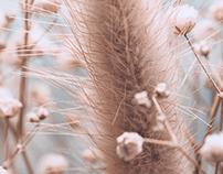 Dried Flower #1