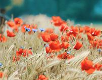 Orange Flower Delivery in Sylmar