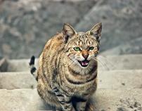 ROAR OF CAT