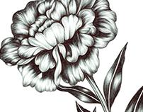 Floral Pen Illustrations