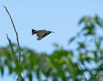 Bird Life 4 South Africa