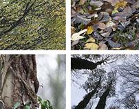 Projet photographie - L'automne