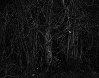 In a Forest Dark