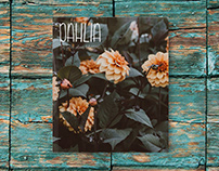 Dahlia // Publication