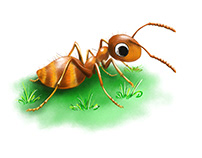lucky ant