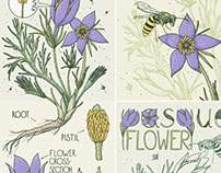 Big botanical set of vector hand drawn illustrations.