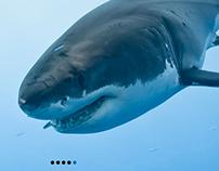 Ocean Advocate News