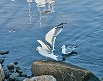 Montauk Harbor, New York