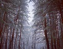 Winterforest 2016