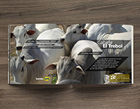 Catálogo para El Trébol
