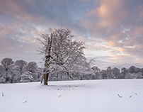 Ashridge Snow
